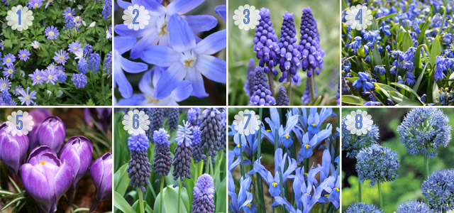 A Touch Of Blue Bulbs For A Blue Flower Garden Garden Bulb Blog