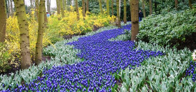 A Touch Of Blue Bulbs For A Blue Flower Garden Garden Bulb Blog